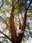Tamarind tree is cozy