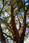 Great tree indeed