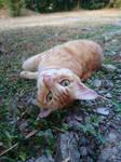 Oren loves the evening breeze