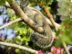 squirrel posing for photo by kumarvijay1708