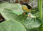 tiny bird on leaf