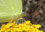 butterfly closeup by kumarvijay1708