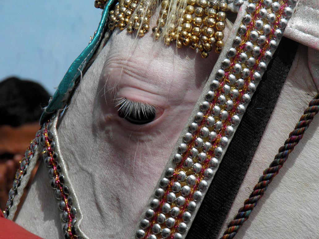 Horse Eyelids by kumarvijay1708