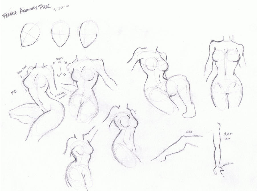 Female Anatomy Prac by mumblemonkey