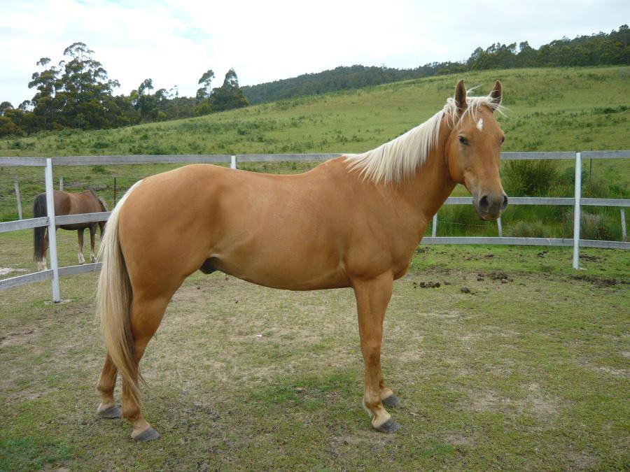 Palomino Pony Paint Color