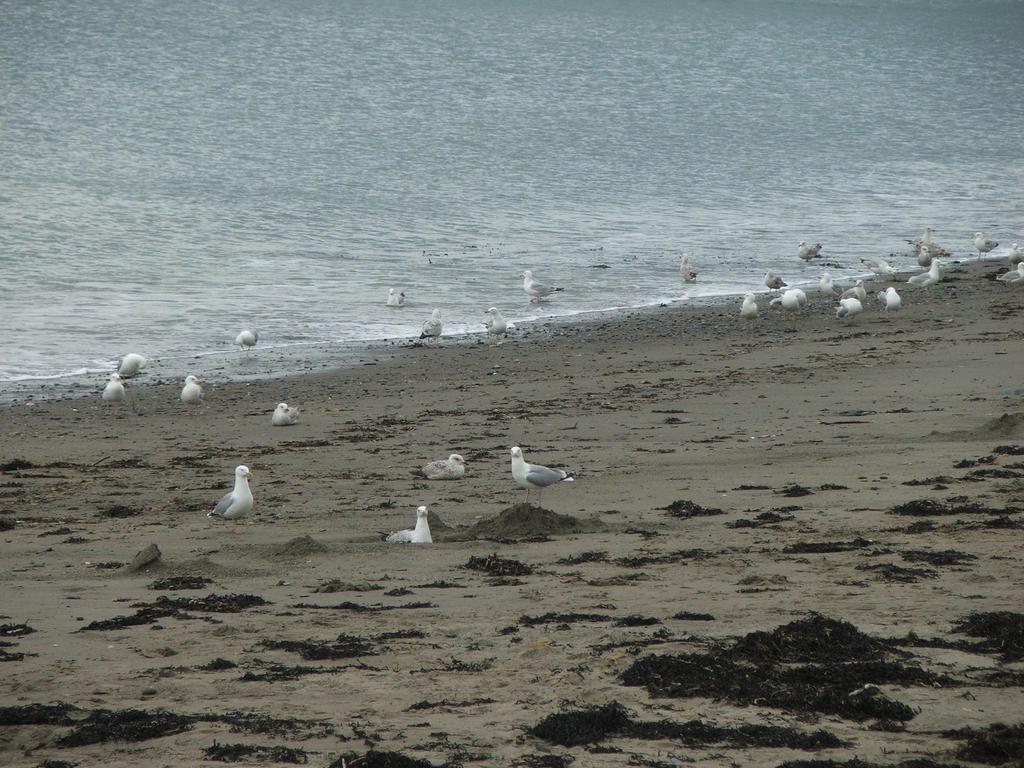 Seagulls by KingfisherSilentArmy