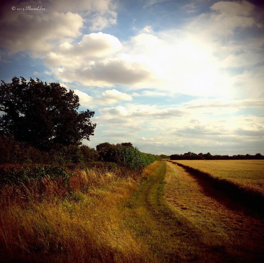 Evening Field by BlastedFen
