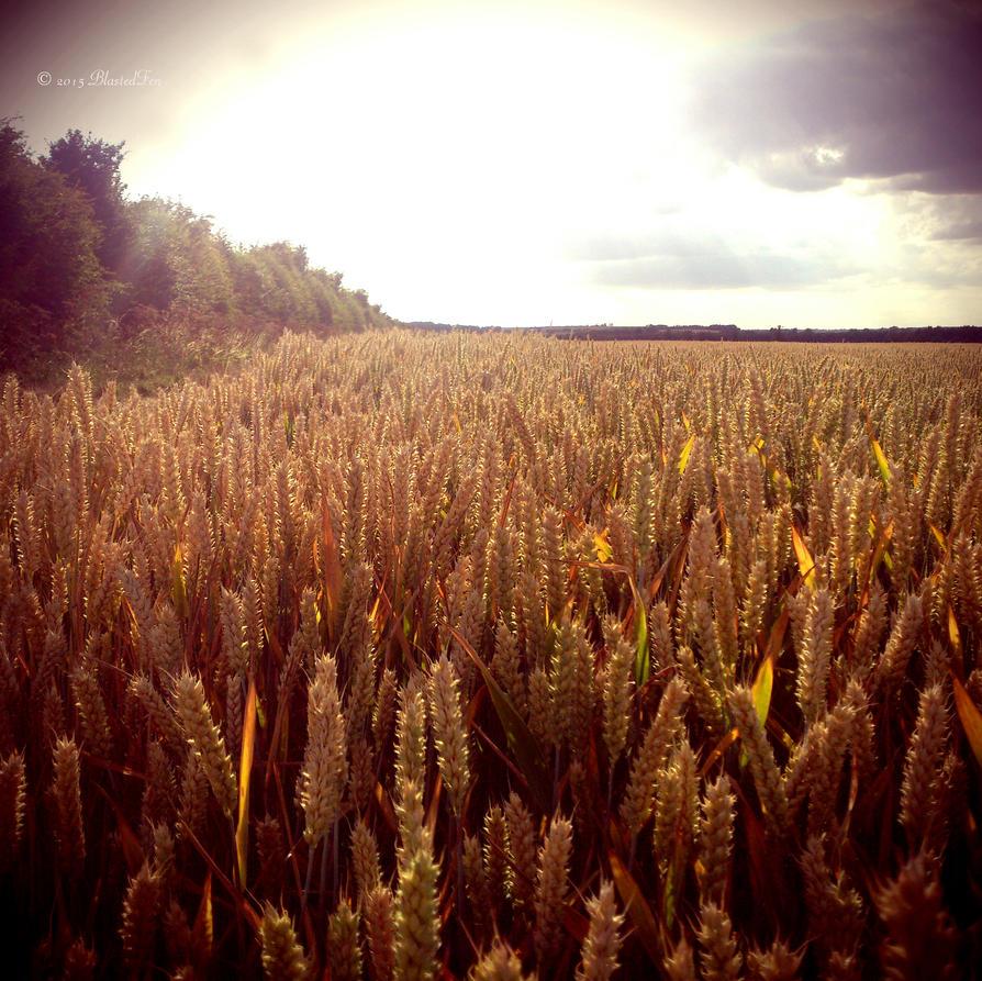 Waving Wheat by BlastedFen