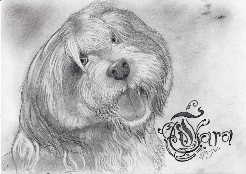 Tara the tibetan terrier by Jerhaia-Tsukikitsune