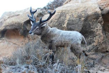 Great Deer artdoll