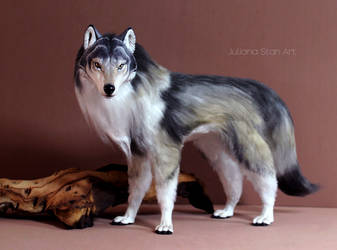 Realistic timber wolf art doll by Juliana Stan