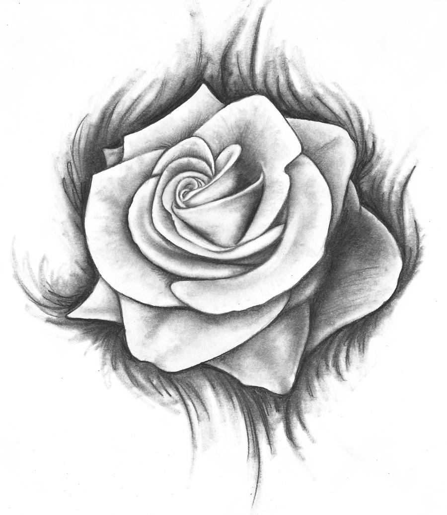 Hoontoidly Rose Drawing Tattoo Images