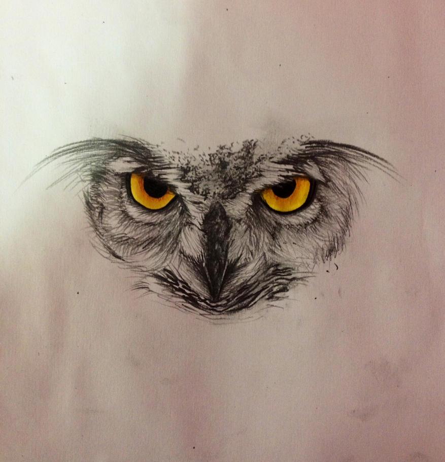 Owl Sketch By The Great Portfolio