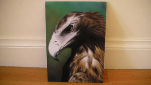 Wedged tailed eagle