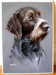 Airbrushed Wirehaired Pointer