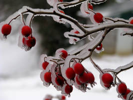 Frozen Berries by worldtravel04