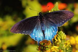 Radiant in Blue by worldtravel04