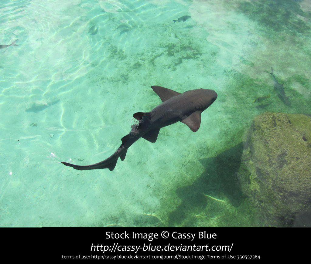 Nurse Shark Stock by Cassy-Blue