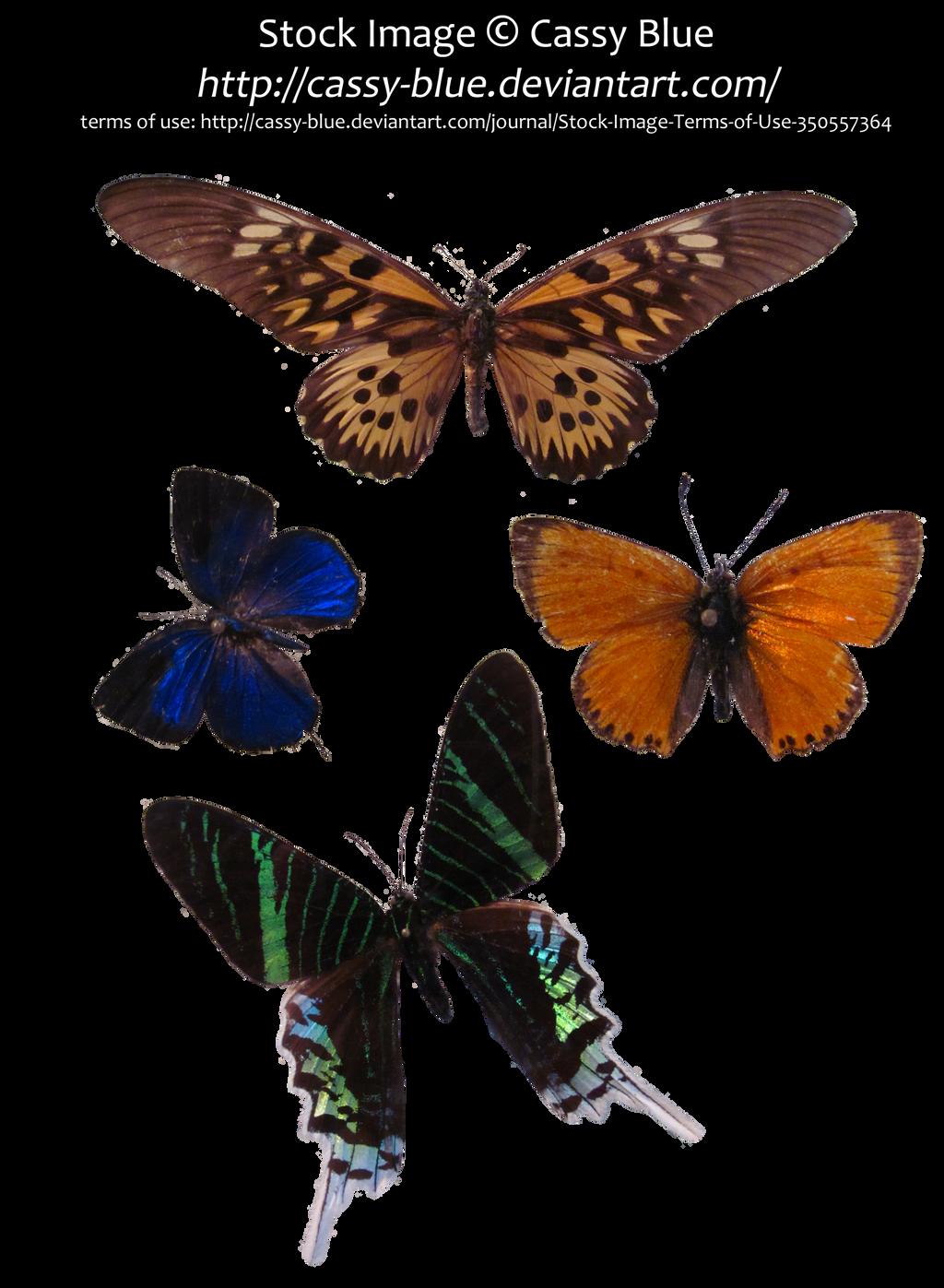 Butterflies and Moth Precut Pack 1