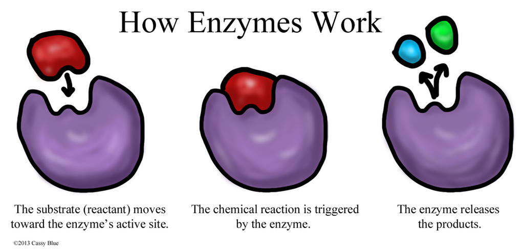 3 6 Enzymes Wiring Diagram