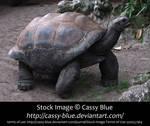 Giant Tortoise Stock 1
