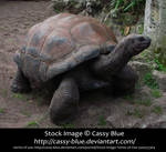 Giant Tortoise Stock 3