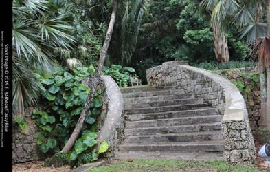 Fairchild Botanical Gardens Stock 2 by Cassy-Blue