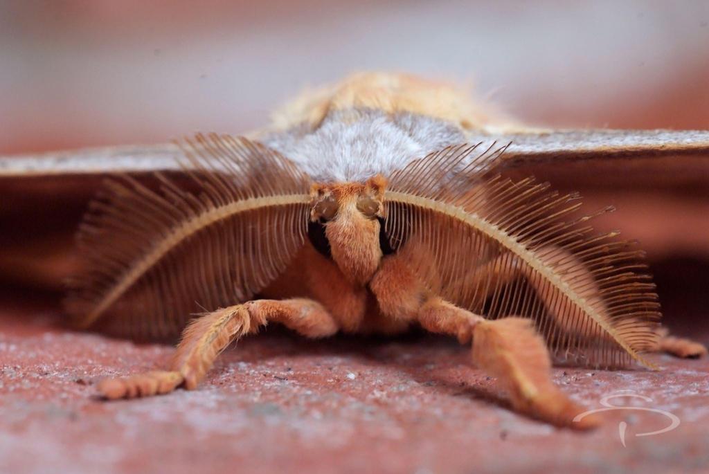 Moth by rocneasta