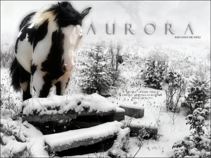 Horse Banner by d0k0ta