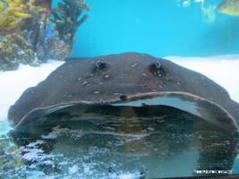 Sting(Ray) by toosexyforcontacts