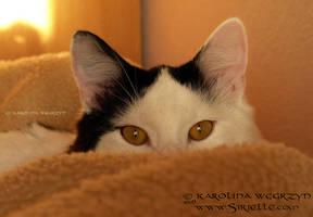 Hide and seek by Sirielle
