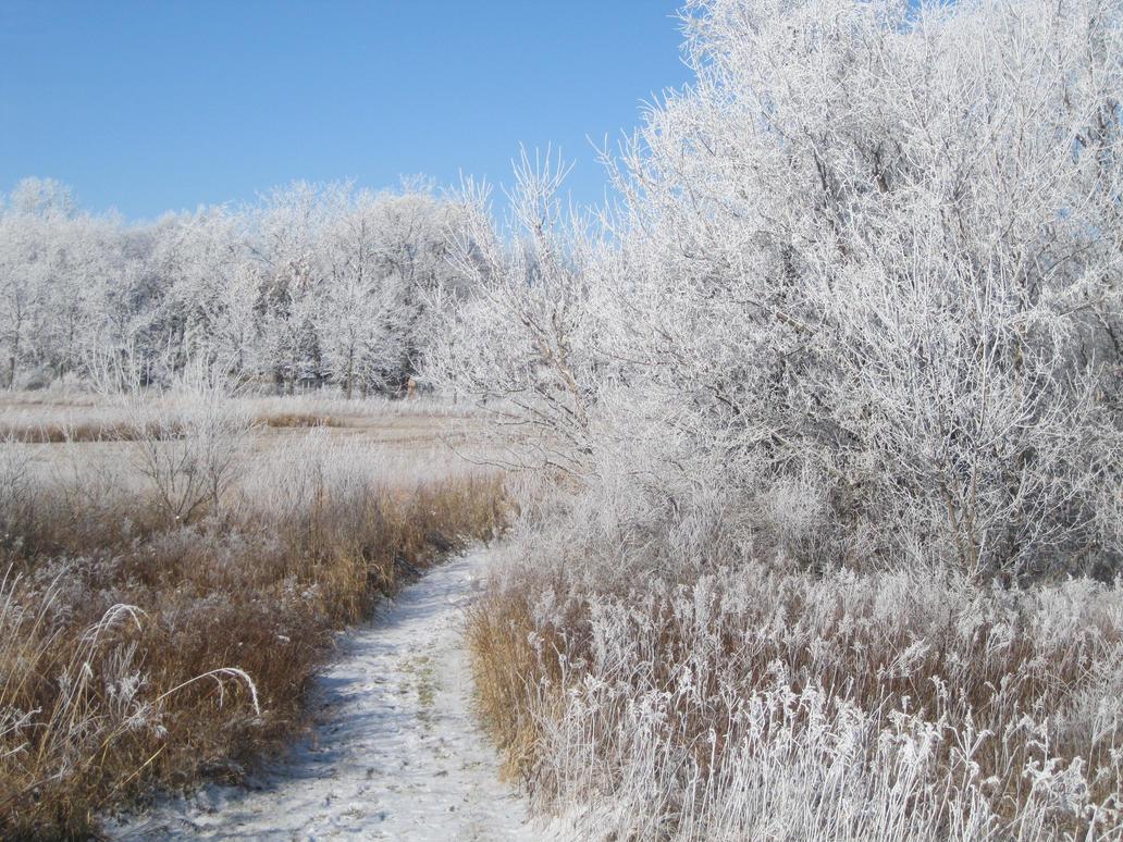 Walking in a Winter Wonderland by hopper195