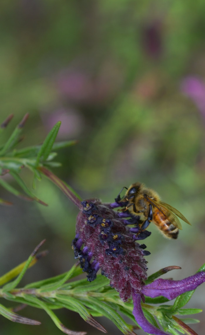 Bee by Peter-James-Wilson