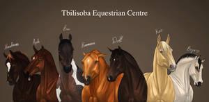 Horses of Tbilisoba Equestrian Centre