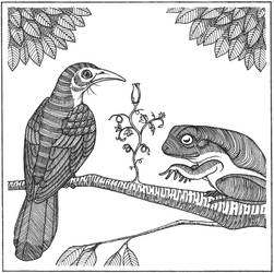 Bird and Frog