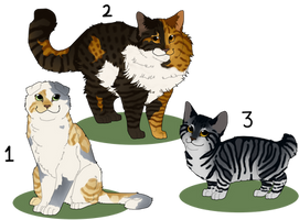 Realistic Feline/ Cat adopts OTA CLOSED by ScorchHound-Adopts