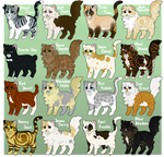 Fluffy cat adopts 5 - OPEN - 10/16