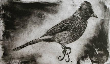 Bilbil bird by pierzyna