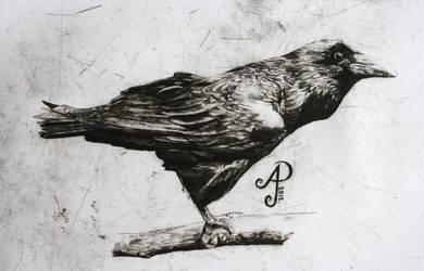 Raven by pierzyna