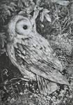 Hide and seek (owl) by pierzyna