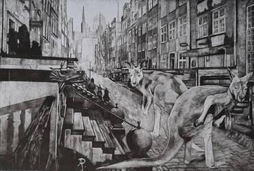 Kangaroos in Gdansk