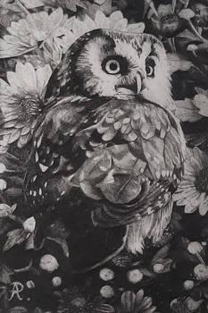 Dry point owl