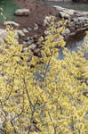 SC Yellow Flowers