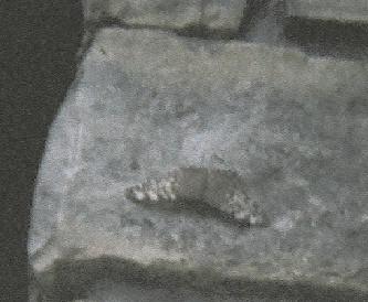 Hidden Butterfly by May5pitfir5erpent