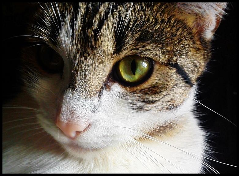 Cat by PanMianDa