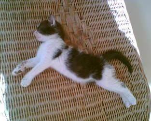 kitten by Setback