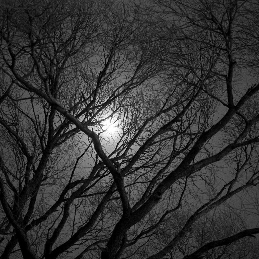 February Moon 1:1 by opogan
