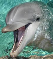 Cheeky Dolphin by XxDanniexX