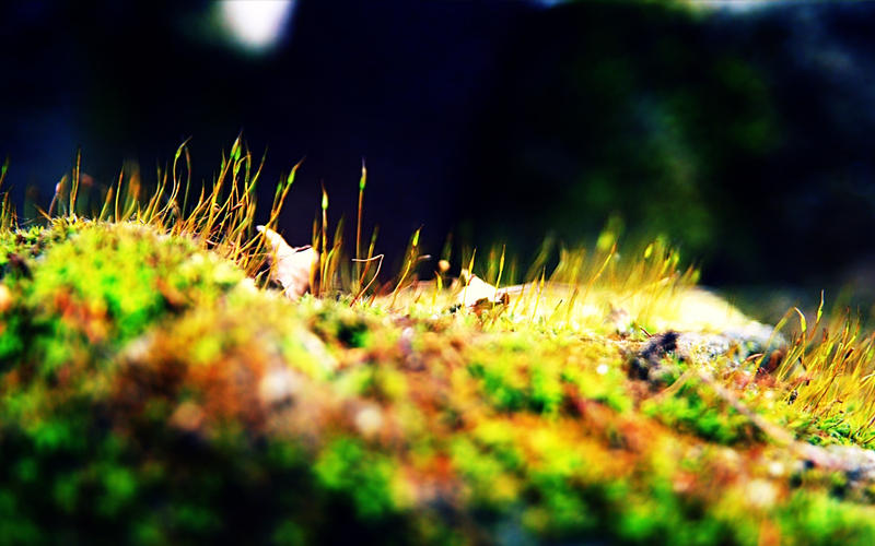 acid forest by phranzee