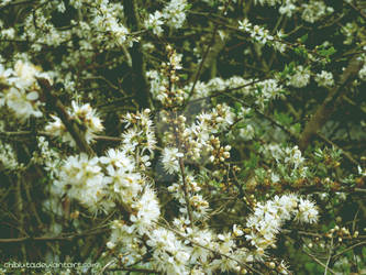 Bloom in Green